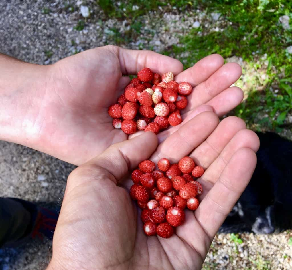 28-Picking-Berries-on-the-Via-Dinarica-Trail.jpg